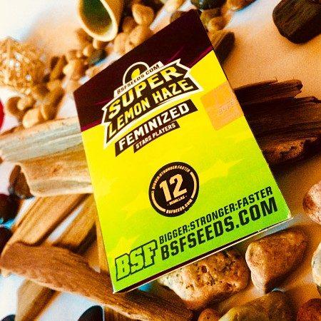 Super Lemon Haze de BSF Seeds